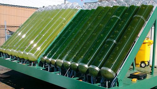 IT-байки: водоросли - топливо будущего