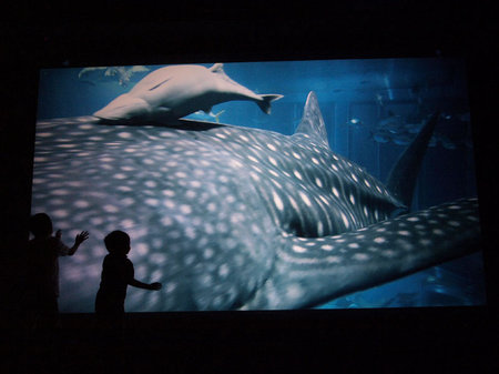 Гигантский 3D-аквариум в штаб-квартире So <!--