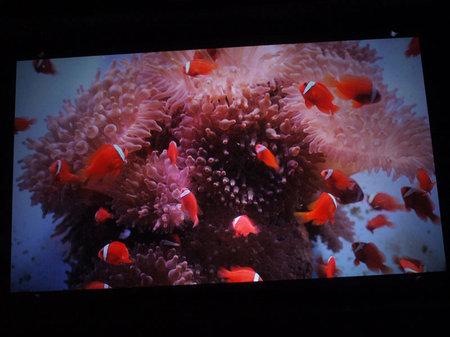 Гигантский 3D-аквариум в штаб-квартире Sony