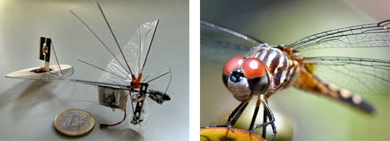Robot-dragonfly