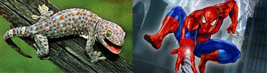 spiderman and gekko