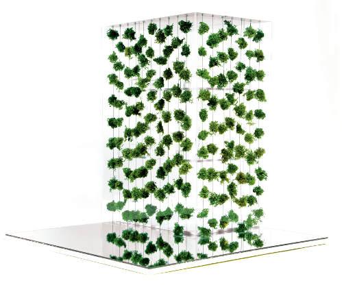 Озеленение продуктами