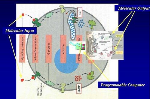 Микродоктор в клетке