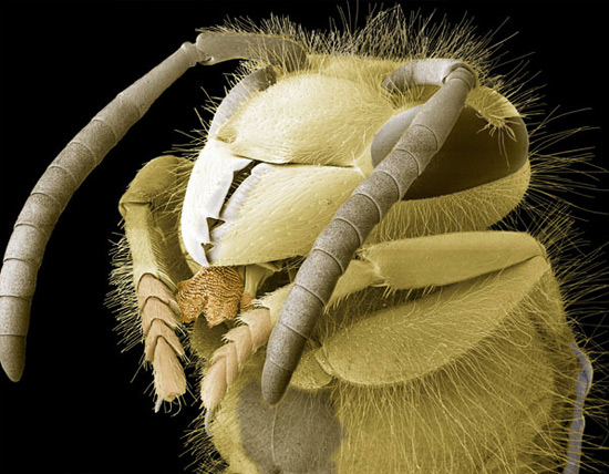 Фото дня: насекомые под электронным микроскопом