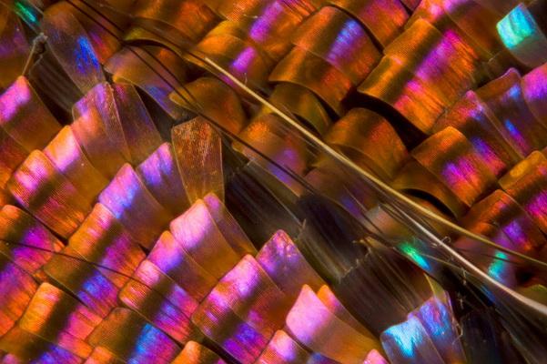 http://www.3dnews.ru/_imgdata/img/2010/12/15/603688/micro-moth-wing-copyright-linden-gledhill.jpg
