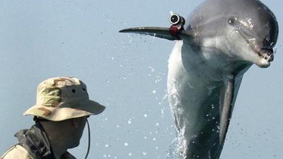 http://www.3dnews.ru/_imgdata/img/2011/06/06/612321/dolphin.jpg