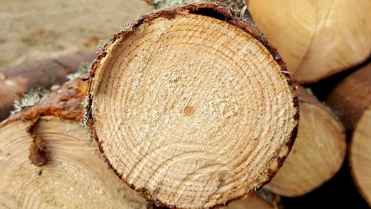 Российские RFID-метки автоматизируют учёт ценных пород древесины