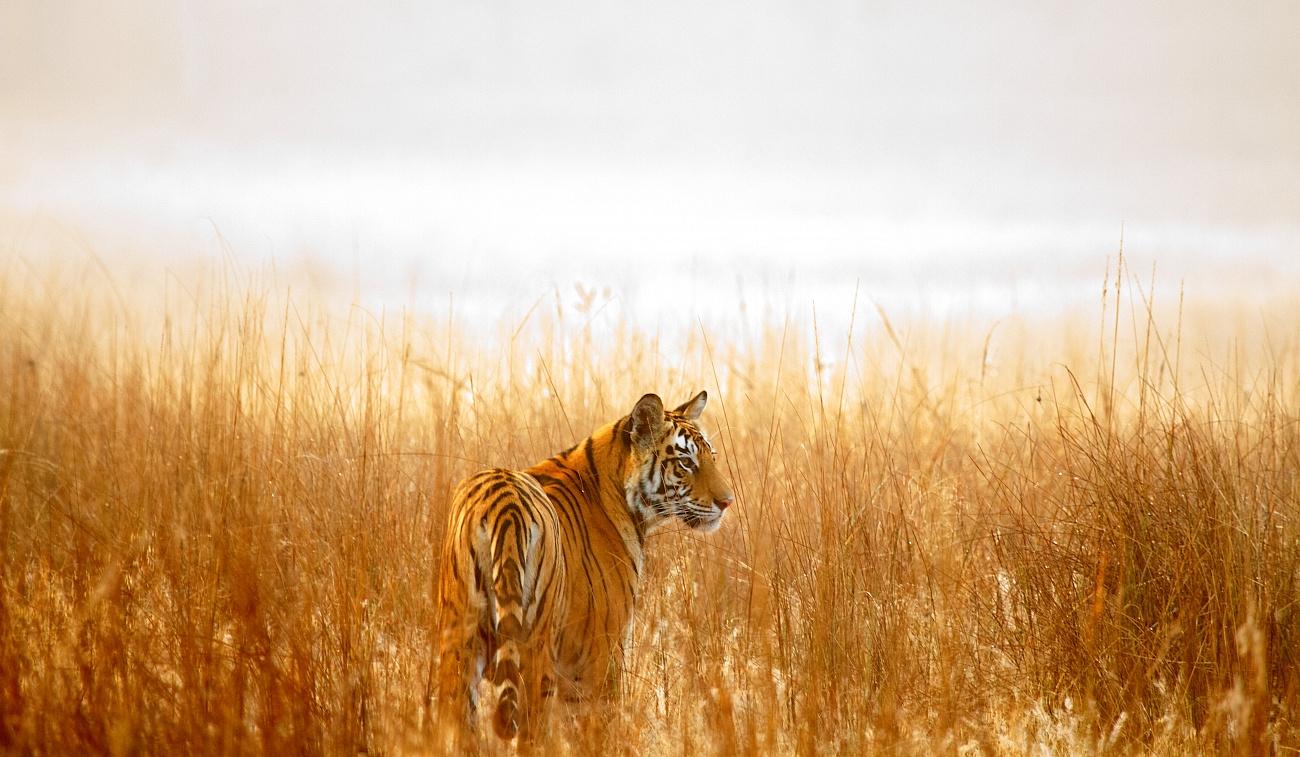 В Казахстан вернутся тигры — WWF России напечатал дом для сотрудников природной резервации