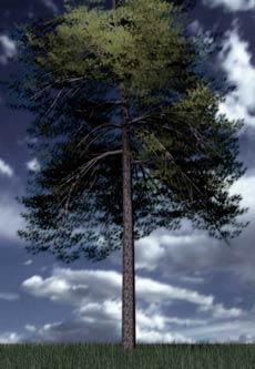 SpeedTree, набор для создания деревьев в 3ds max